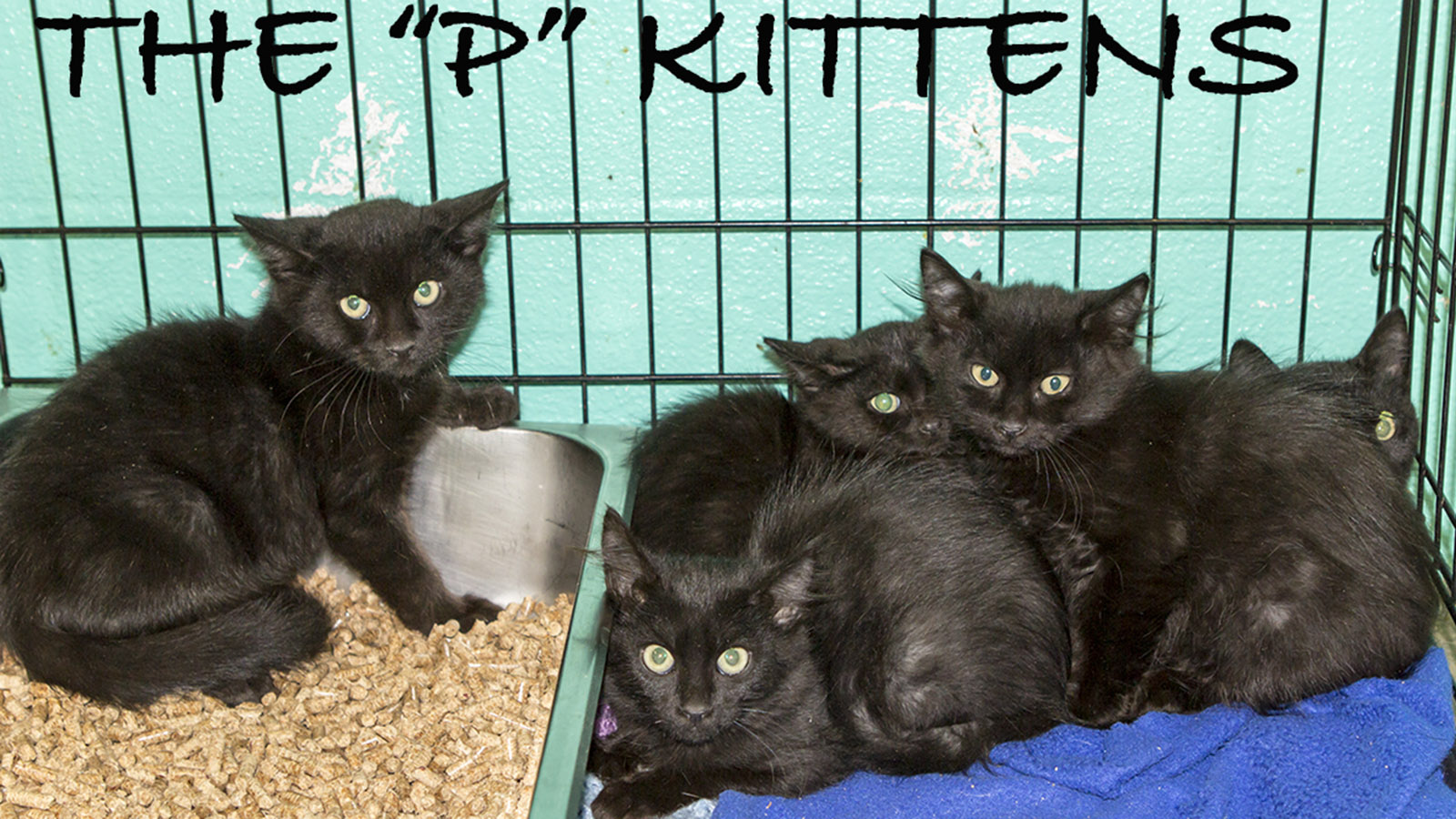 The P Kiittens